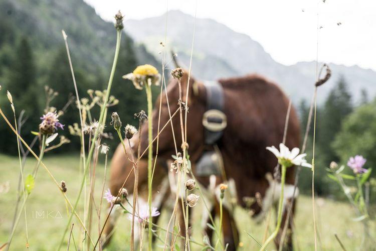 EyeEm Selects Flower Growth Plant Nature Fragility Outdoors Day Beauty In Nature No People Flower Head Freshness Close-up Sky Cow Allgäu Allgaeu Allgäuer Alpen