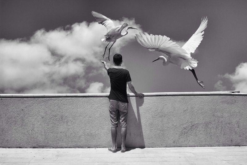 Man Feeding Herons