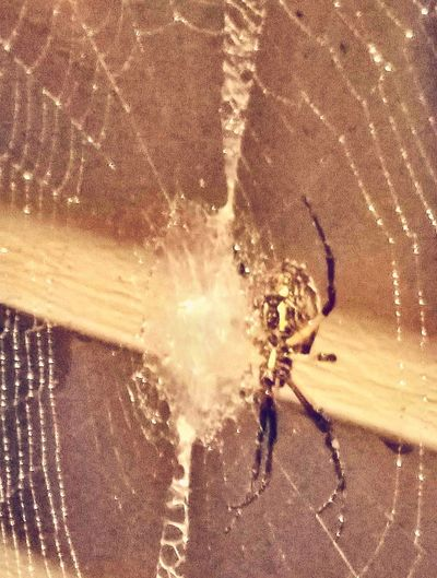 All In The Name rypical USA writing spider...