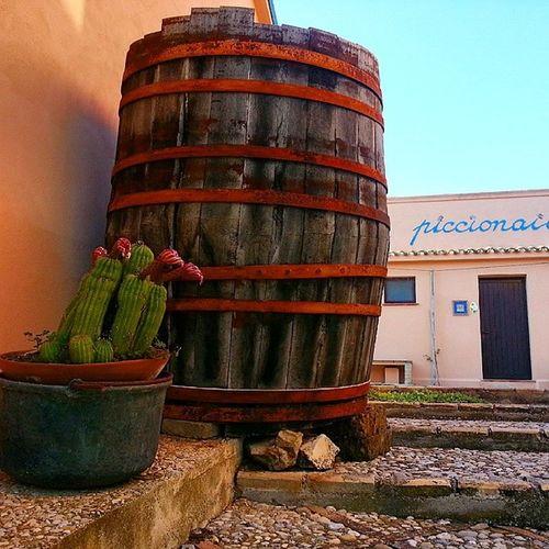 Abruzzo Silvi_Paese Teramo Agriturismo Piccionaia Vino Botte