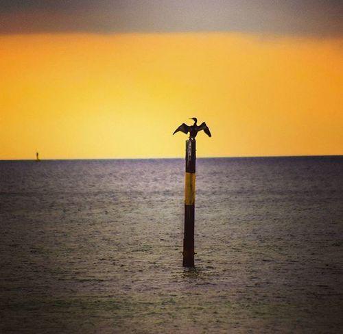 Todays sunset ❤ Kormoran Sunset Sonnenuntergang Bird Sun Ruegen Balticsea Baltic Ostsee Insel Team_photunique Sonne Sonnenuntergang Home Heimat