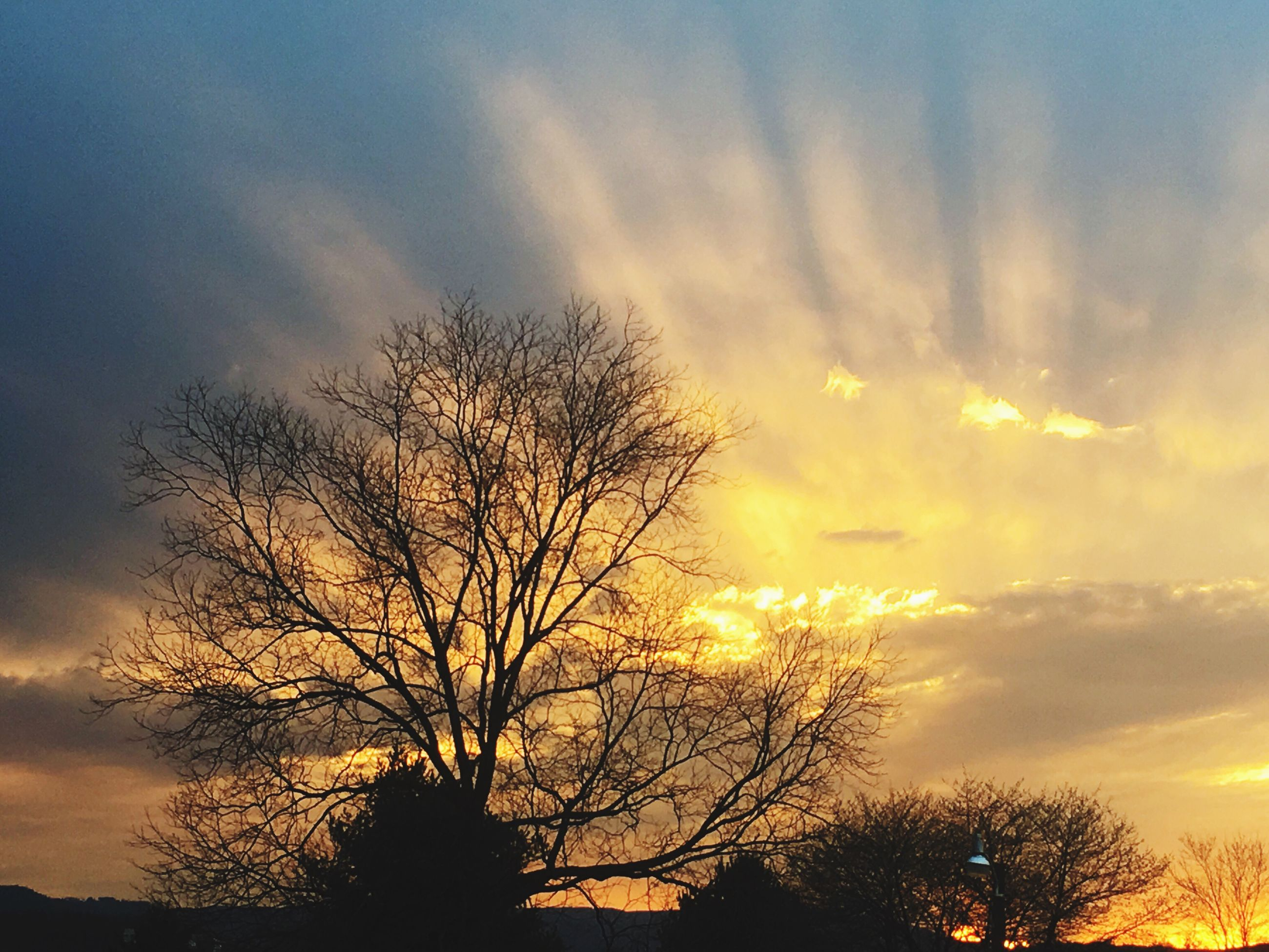 sunset, nature, sky, silhouette, beauty in nature, cloud - sky, no people, dramatic sky, tranquility, tree, outdoors, beauty, scenics, close-up, day