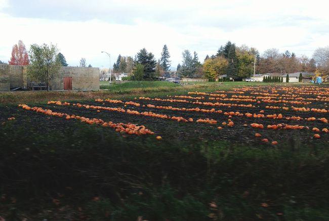 Pumpkinpatch Pumpkins Pumpkin Season