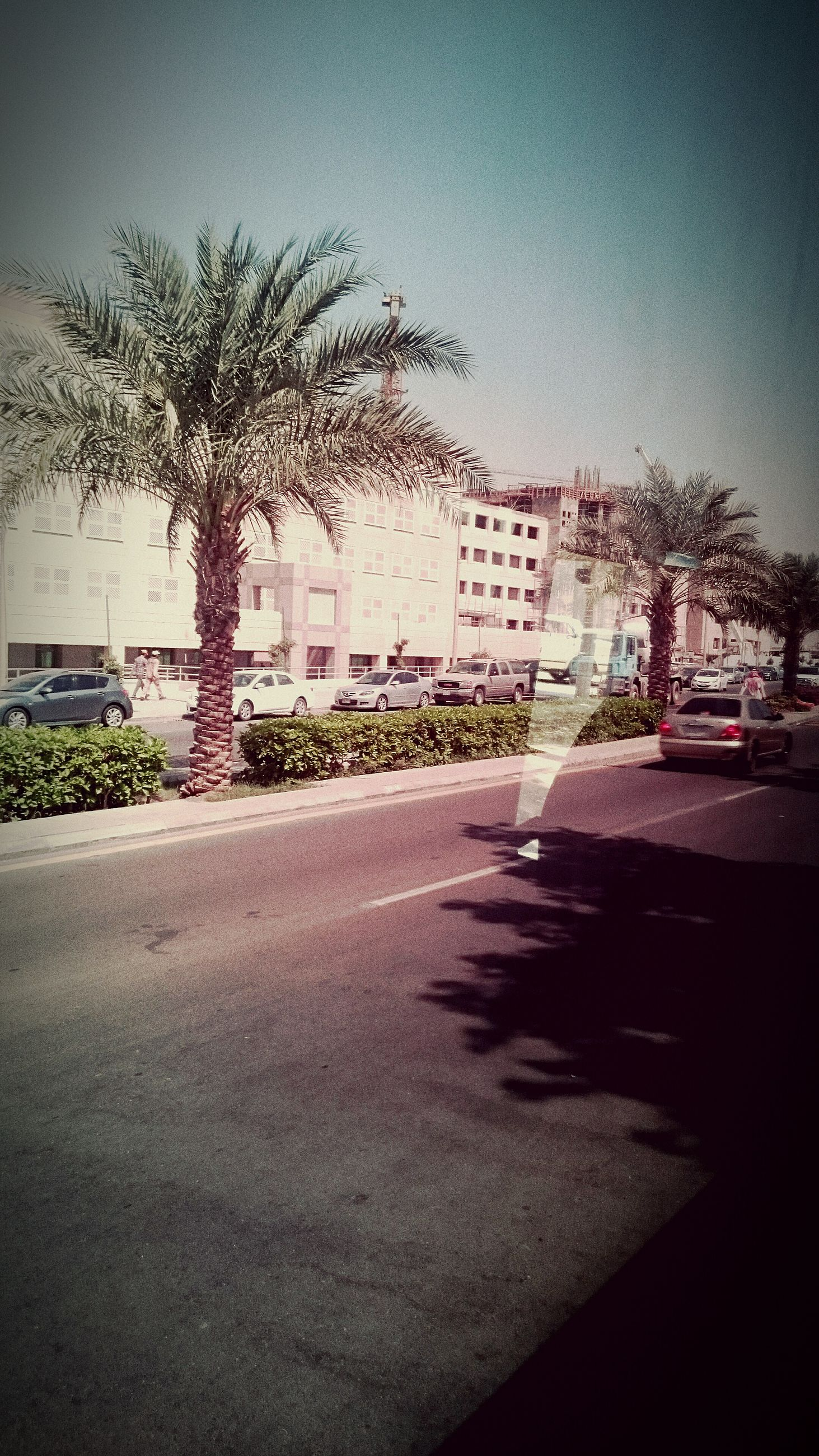 building exterior, architecture, built structure, tree, city, street, road, car, transportation, clear sky, building, residential structure, residential building, palm tree, house, sunlight, sky, shadow, outdoors, city street