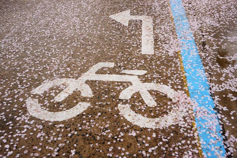 High Angle View Of Cherry Blossom Petals On Bicycle Lane Sign