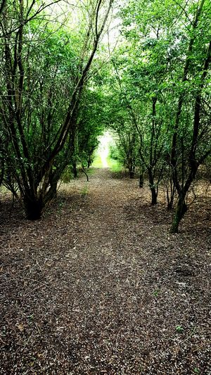 Secret Avenue Forestwalk Forest Photography Forest Path Check This Out Break Time Walking Around