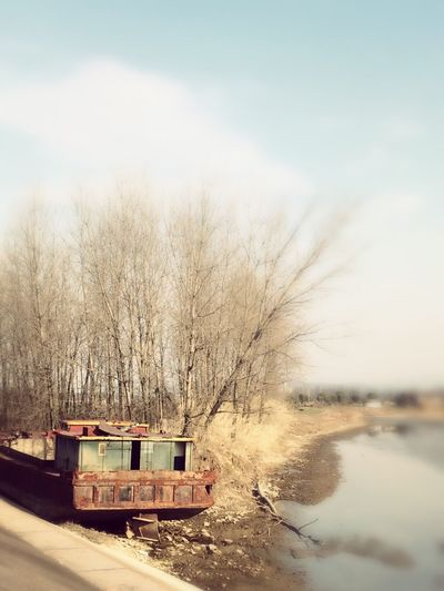 Showcase: February Qiantang River Ship Tree