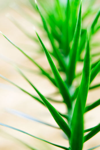 Green Color Growth Plant Close-up Plant Part Leaf Nature Beauty In Nature Selective Focus Freshness Grass Day Vulnerability  Natural Pattern Fragility Botany