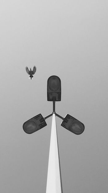 Welcome To Black Low Angle View No People Day Sky Outdoors Bird Bird Photography Animal Themes Blackandwhite Bnw