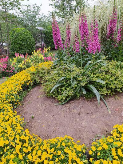 Yellow flowering plants in garden