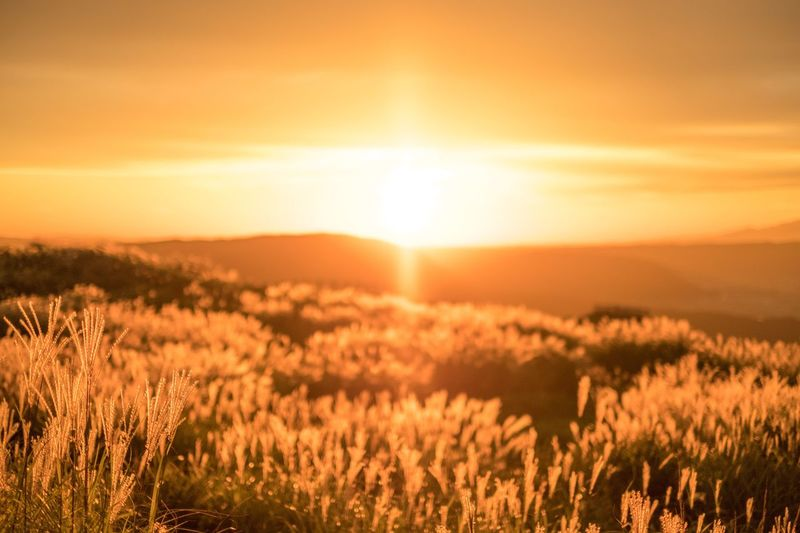 Sunrise Sun Nature Beauty In Nature Landscape Sky No People Japan Nature Eye Em Nature Lover Beauty In Nature Focus On Foreground