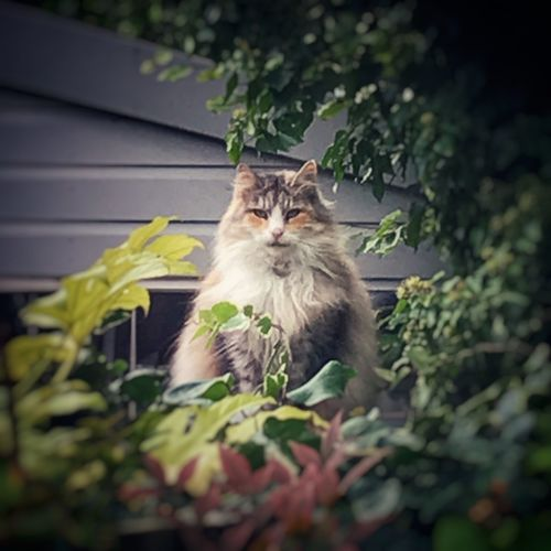 Watching you Mammal Animal Animal Themes One Animal Domestic Domestic Animals Pets Cat No People Selective Focus Portrait Feline