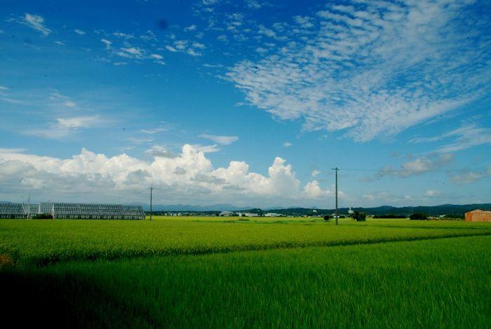 Summertime Summersky Sky Clouds And Sky EyeEm Nature Lover Rice Field Japan 夏空 入道雲 Landscape