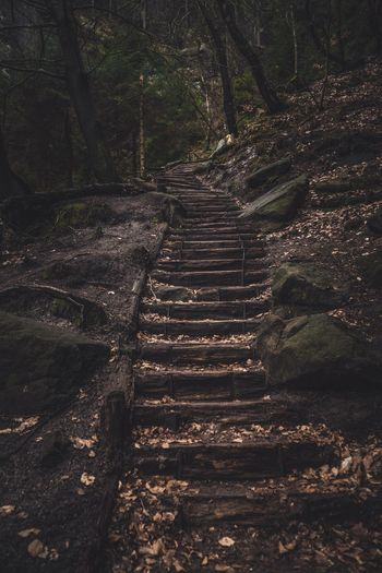 Steps against trees in forest
