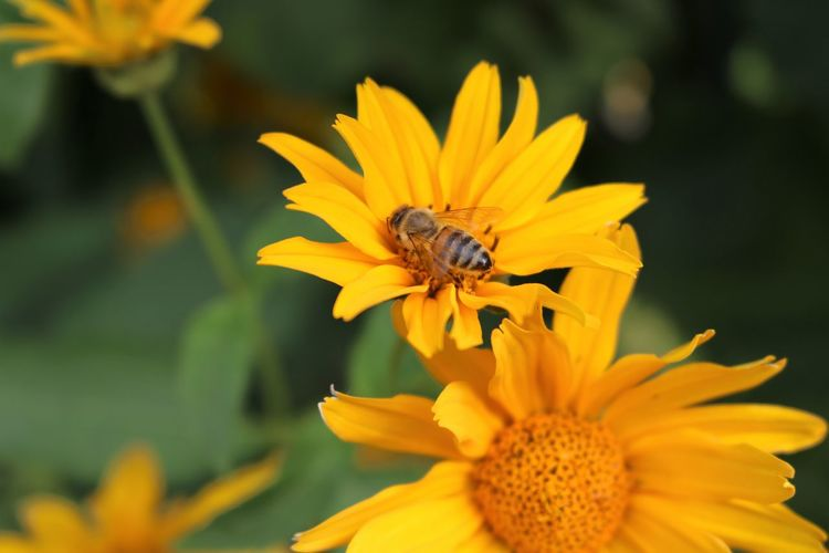 Animal Beauty In Nature Flower Flower Head Flowering Plant Insect No People One Animal Plant Yellow