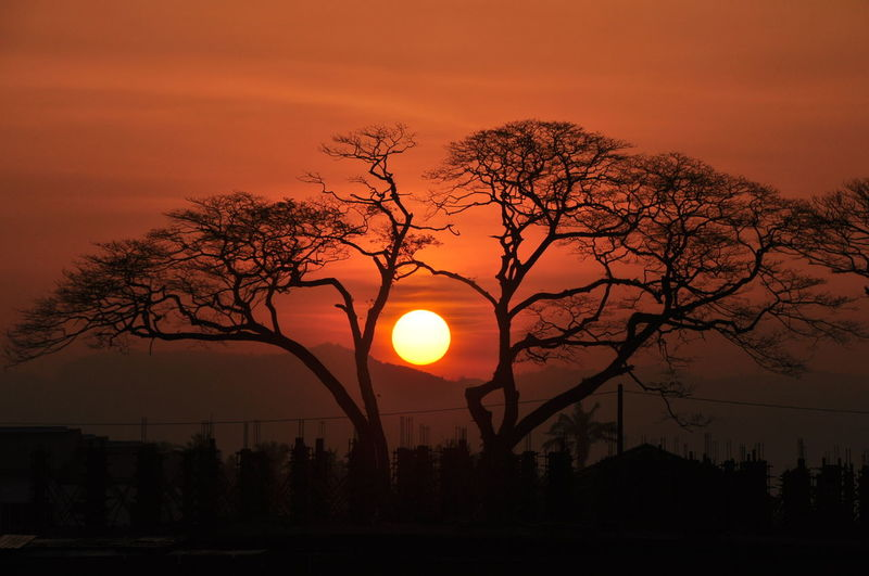 Bare Tree Beauty In Nature Branch Nature No People Orange Color Outdoors Scenics Silhouette Sky Sun Sunset Tranquil Scene Tranquility Tree Welcome To Black