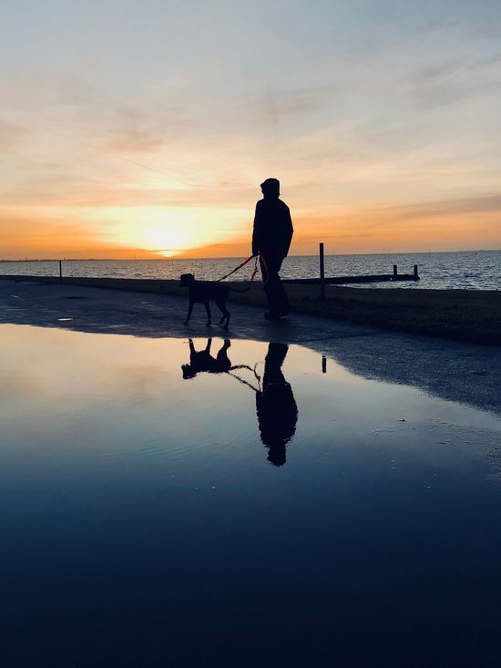 dog walk Sunset Dog Water Sunset Silhouette Sea Nature Reflection Beauty In Nature Sky Real People Outdoors