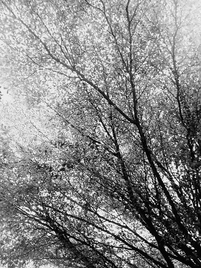 Tree Tree Photography Tree_collection  Leaves Leaf Tree Art View Tree View Nature Nature Photography Nature Collection Nature Color Low Angle Shot Creative Color On Leaves Black And White Black And White Photography Black And White Nature Black And White Tree