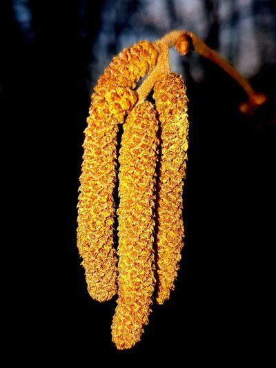 Hanging Yellow