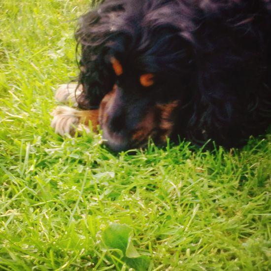 My Dog ;D Cute♡ Enjoying Life Beautiful