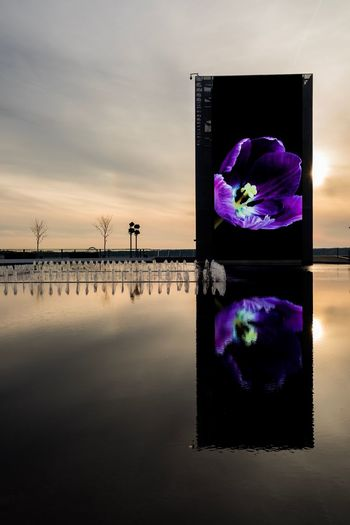 Purple flowers on water against sky at sunset