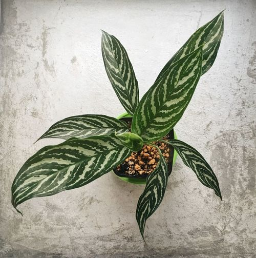 Plant Part Leaf Food And Drink Plant Food Nature Green Color Herb Wellbeing Studio Shot Freshness Art And Craft Still Life Close-up Directly Above No People Indoors  Healthy Eating Fruit Growth