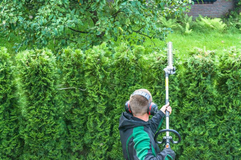 Man landscaping shrubs