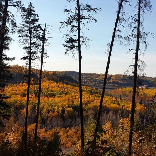 ☆ Peek-a-boo ☆ Fort McMurray Ymm Nature Fall