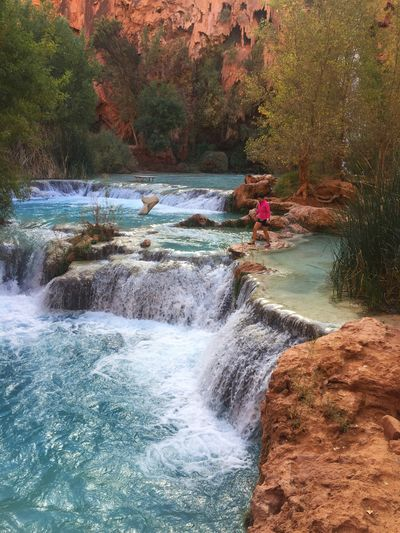 Havasu Falls, Havasupai Cascades Havasupai Mooney Falls Havasu Falls Water Motion River Waterfall Nature Rock - Object Tree