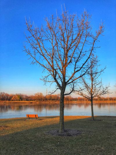 Blue sky Blue Sky Horizon Over Water Water Sky Plant Beauty In Nature Tree Nature Tranquility Lake Tranquil Scene Clear Sky Day Scenics - Nature Land Beach Sunlight Branch Blue Outdoors Lakeshore No People