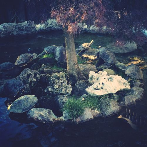 Turtles Camouflage Stones