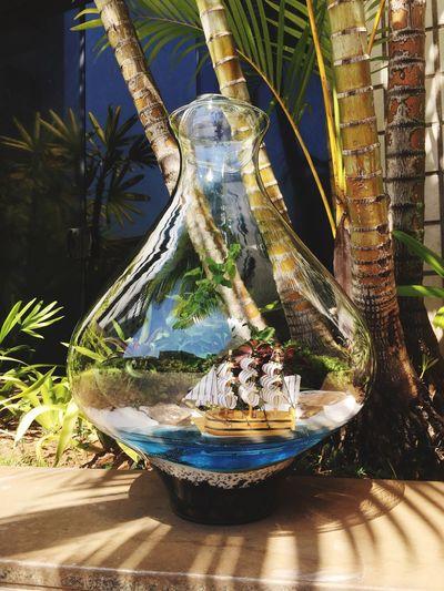 Terrarium🍀 Terrarios Terrários Brasil Terrariuns Moss Beach Caravel EyeEm Best Shots
