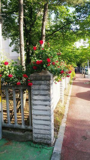 길 집앞 산책 Rose🌹 Load Walk