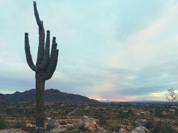 Arizona Naturephotography Eye4photography  Nature IPhoneography Photography EyeEm Best Edits EyeEm Best Shots Sunset EyeEmBestPics