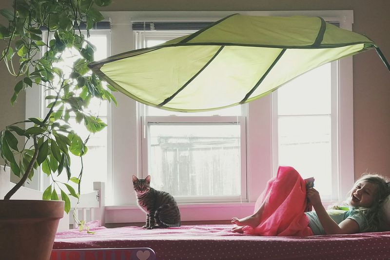 Indoors  Home Interior Window Bedroom Day Girl Plants Houseplant Leaf Green Cat Light And Shadow Place Of Heart