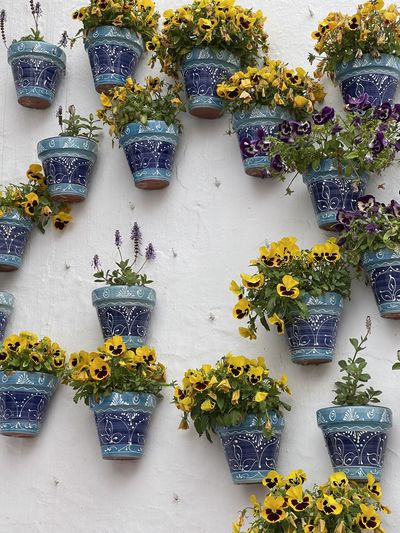 Potted plants on wall