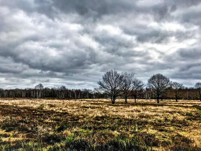 Nature Europe Deutschland Germany Cloud - Sky Landscape Tranquility Sky Nature Beauty In Nature Tree Field Scenics Tranquil Scene Bare Tree Day Outdoors No People Storm Cloud
