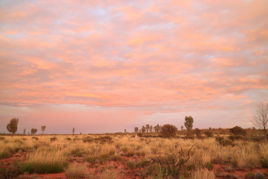 Deserts Around The World Australia Pastel Pastel Colors Desert Northern Territory Sunrise No Filter No Filter, No Edit, Just Photography Uluru Kata Tjuta Pink Finding New Frontiers