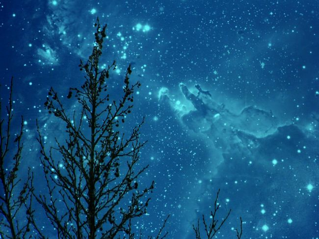 Night Sky Beauty In Nature Outdoors Tree No People Nature Blue Sky EyeEm EyeEm Nature Lover EyeEm Gallery
