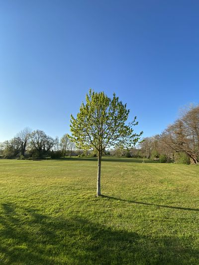Trees on field against clear blue sky