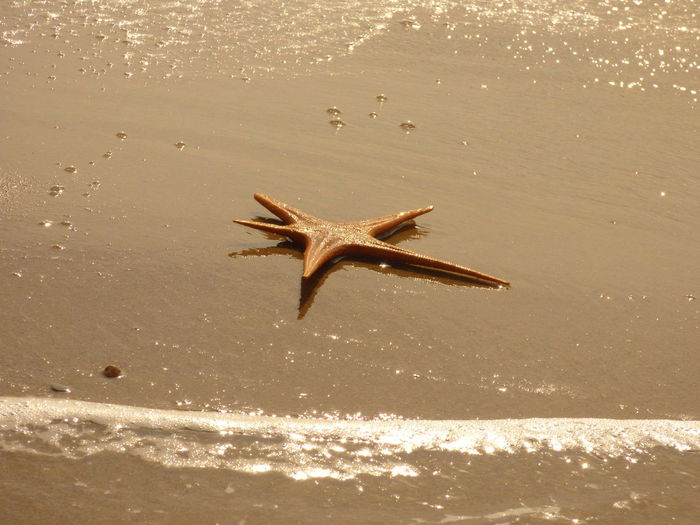 Dead starfish on shore at beach during sunny day