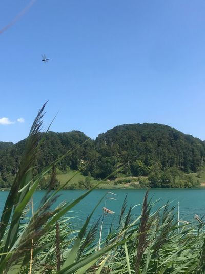 Dragonfly over Lake Türlersee, Switzerland Dragonfly Lake Switzerland Sky Plant Water Tree Nature Growth Beauty In Nature