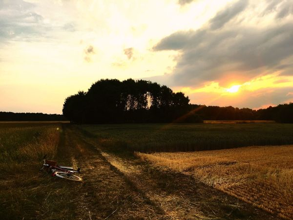 Nice Bike Trip ❤️🌲 Nature Germany Munich Bike YesSunset Sky Nature Scenics Tree Field Beauty In Nature Landscape Tranquility Cloud - Sky Tranquil Scene Grass Outdoors No People Agriculture Growth Water Rural Scene Day