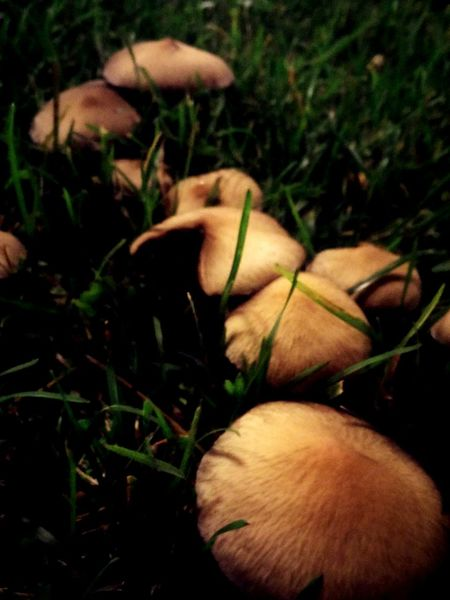 Mushroom Grass No People Nature Day Outdoors Growth Close-up One Animal Animal Themes Toadstool Freshness