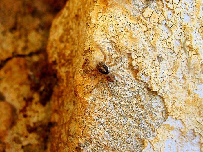 Animals Walking Around Taking Photos Nature Beautiful Macro_collection Macro Nature Macrolove Macro Spider Macro Photography