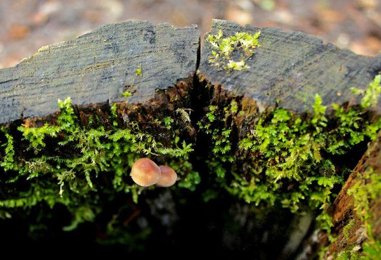 Mushrooms Moos