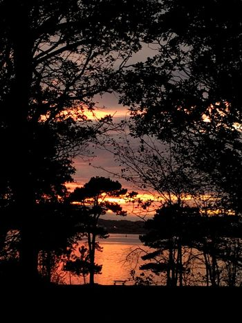 Sunset through the trees Tree Silhouette Nature Beauty In Nature Tranquil Scene Scenics Sunset Tranquility Water Outdoors Sky Forest No People Tree Trunk Branch Night Calm Water Waterfront