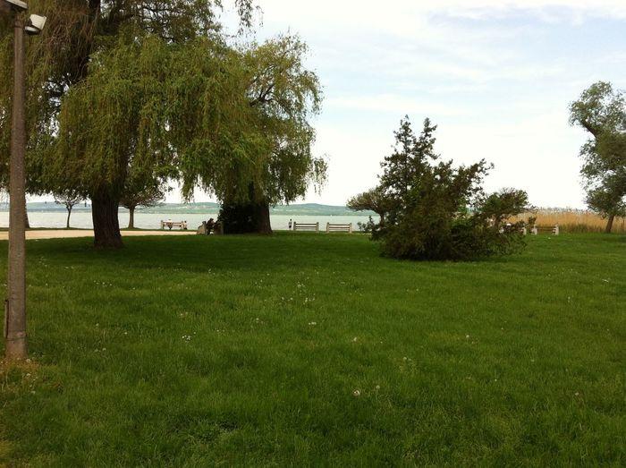 Grass Green Color Park Sky Tree