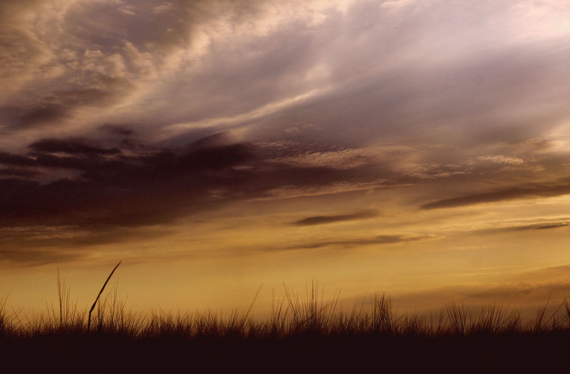 Beauty In Nature Cloud Cloud - Sky Cloudy Dramatic Sky Field Grass Growth Horizon Over Land Idyllic Landscape Nature No People Non Urban Scene Non-urban Scene Orange Color Outdoors Plant Remote Rural Scene Scenics Sky Sunset Tranquil Scene Tranquility