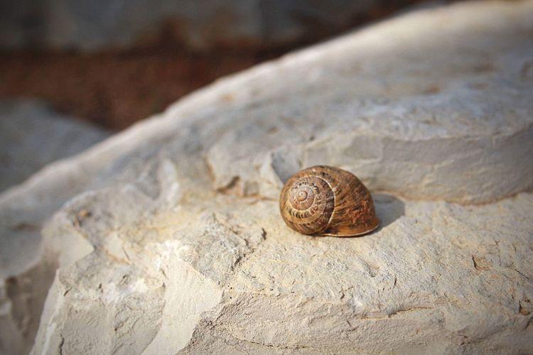🐌 Snail Animal